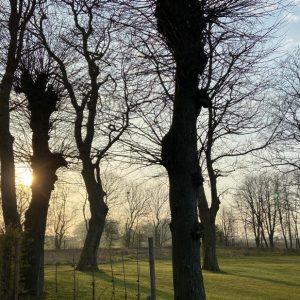 Parkanlage - Aussenbereich Ferienwohnungen Gulfhof Dreybül